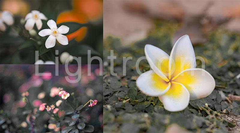 วิธีลดสีรูปภาพด้วย Lightroom บนมือถือ เพื่อให้ดอกไม้ดูเด่นขึ้นแบบอาร์ตๆ