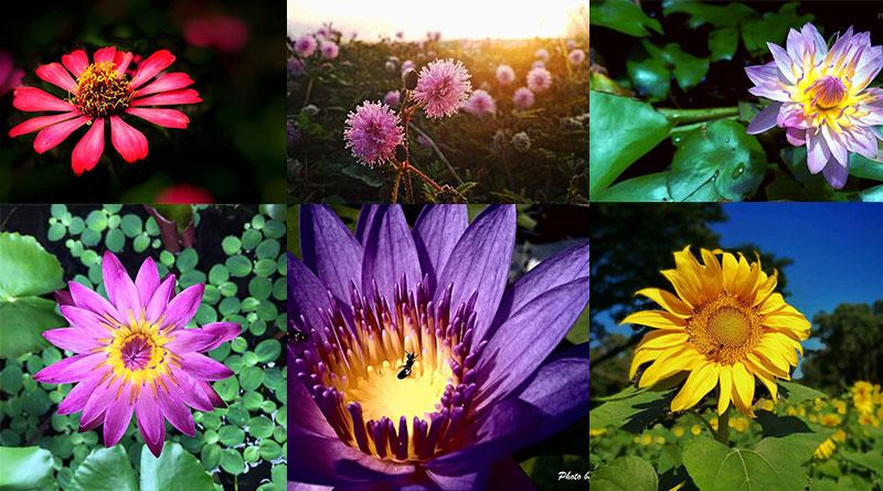 8 ภาพถ่ายดอกไม้สวยๆ จากเพจชมรมถ่ายภาพสวยด้วยกล้องมือถือ