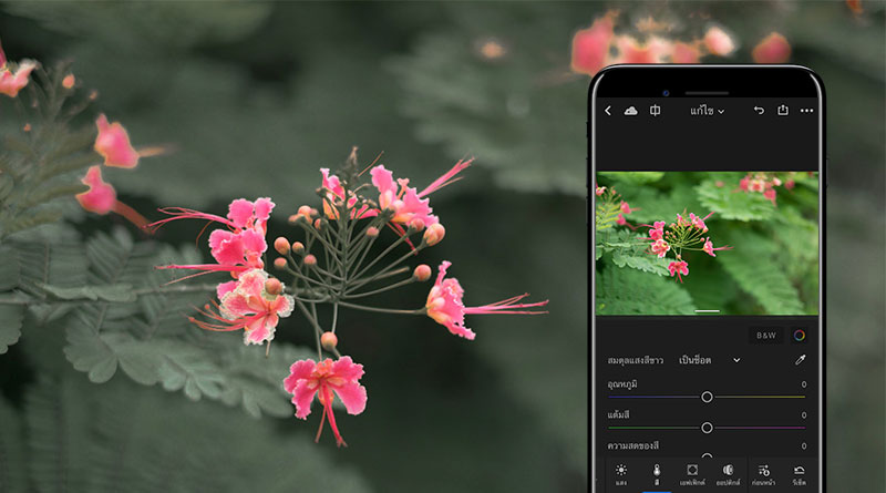 วิธีลดสีใบไม้ ให้ดอกไม้ดูเด่นขึ้น ด้วยแอพ Lightroom บน iPhone